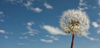 allergie-fleur
